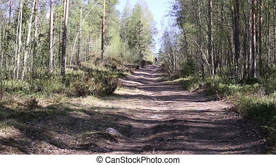 Man riding on bike in forest - A cyclist rides along the...