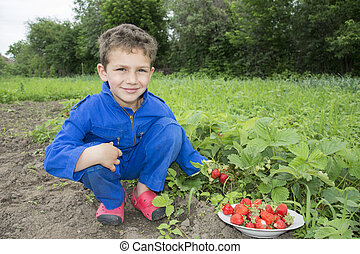 In the summer the garden curly boy vomits strawberries in a...
