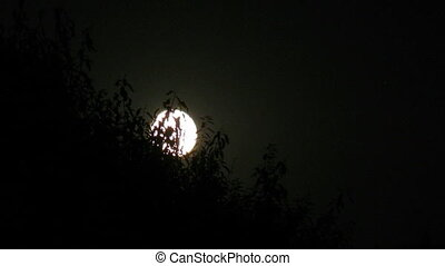 Moon comes up because of trees