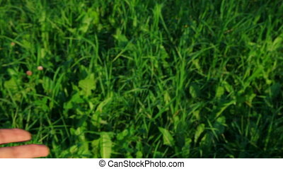 stretching hand on green grass background