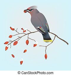 Bohemian waxwing on a branch - Bohemian waxwing bird on a...
