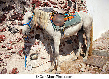 Donkey in Oia, Santorini island, Greece - Saddled mule or...