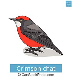 Crimson chat bird educational game vector - Crimson chat...