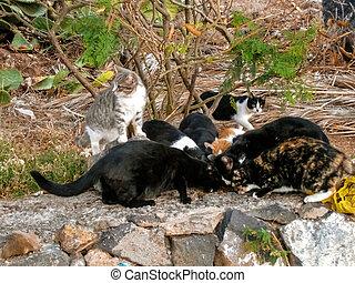 stray cats feeding - stray little cats feeding from pet food...