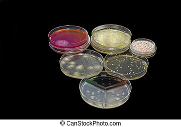 Petri plates - Different petri plates containing bacteria,...