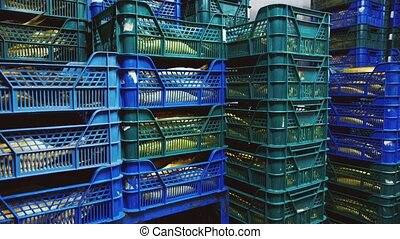 Many fish in boxes in a warehouse-refrigerator