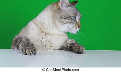 Sad cat sitting at the table and reeling on green screen...