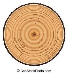 Lumber wood isolated on white