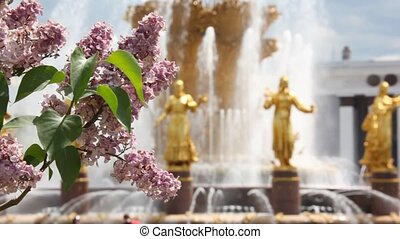 lilac with the friendship fountain on background and focus shifting to the fountain