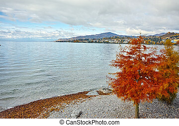 Red tree on Lake Geneva in Montreux, canton of Vaud,...