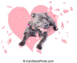 Dog with pink rose on heart shape background - Romantic dog...
