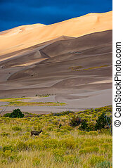 Wild Deer Sand Dunes Colorado