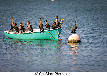 cormorants - Group of cormorants resting on the boat