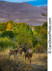 Wild Deer Family Colorado Sand Dunes Wildlife