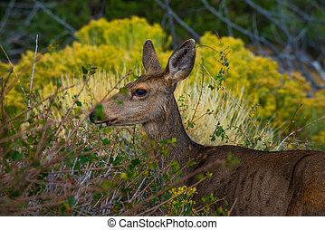 Wild Deer Profile Colorado Wildlife - Wild deer at Great...