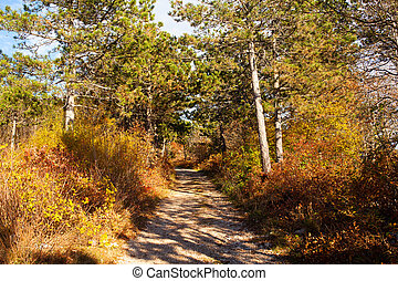 Road in the Karst countryside - View of the road in the...