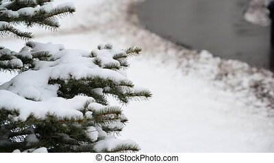The branches of spruce in  snow in at park