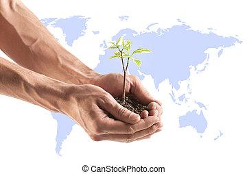 植物, 若い, 手