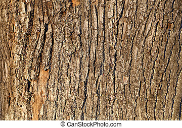 bark of the oak tree