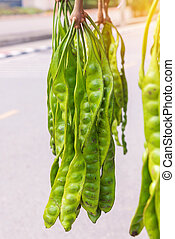 Fresh of Parkia speciosa or green beans on the market
