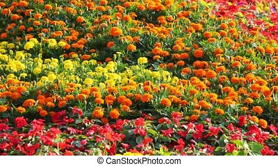 yellow, orange, red, blue, violet flower beds