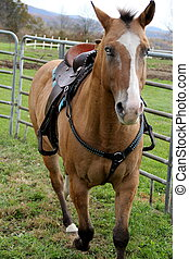 Horse trotting in corral - Beautiful horse with bright blue...