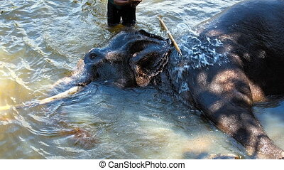 mahout rinsing his elephant river