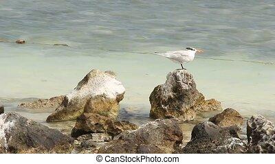 Seagull on an ocean coastline