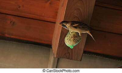 Sparrow scares fellow away - A little sparrow stands on a...