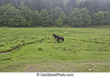 Horses on a green meadow 1 - Horse in the meadow in the mist...