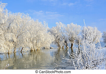 gelado, árvores, Inverno