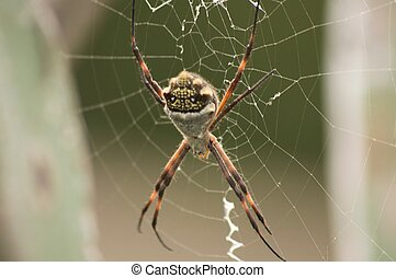 spider on spiderweb