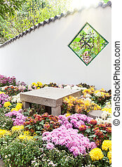 The Colorful chrysanthemums flowerbed in garden