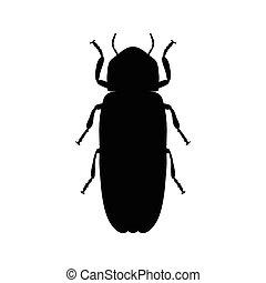 Firefly beetle Lampyridae Sketch of Firefly beetle Firefly...