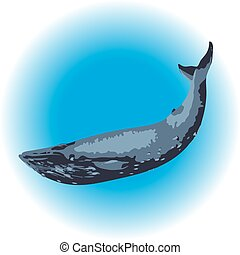 Blue whale mammal - image of a blue whale mammal in the...