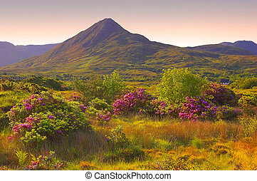 Connemara - summer Connemara, Co.Galway, Ireland with wild...