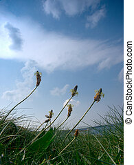 The Meadow - worms eye view of blue sky,wild flowers and...