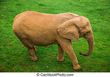 Elephant in the Addo Elephant National Park, South Africa