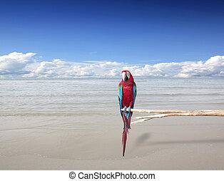 Parrots sea sky natural creatures - Parrots sea sky natural...