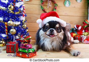 Dog with Christmas - Chihuahua dog with Christmas decoration...