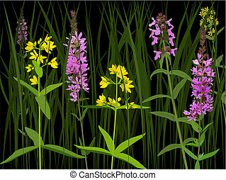 Meadow herbs - Three species of european wet meadow flowers:...