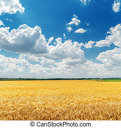 low clouds in blue sky over golden field with harvest