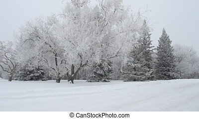 Winter park with snow covered trees Canada
