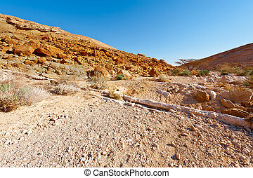 Dry Riverbed in the Negev Desert