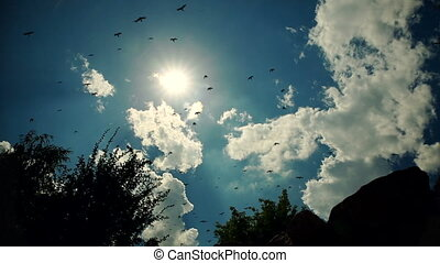 Birds Flies Against Blue Cloudy Sky
