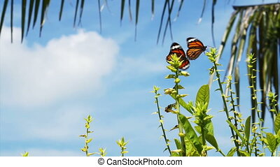 Monarch Butterflies around plants