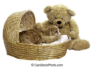 Nap Time - A tired dog is laying down in a wicker basket...