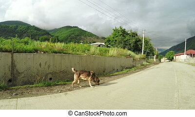Dog on street - On road to Svan village in Georgia runs dog