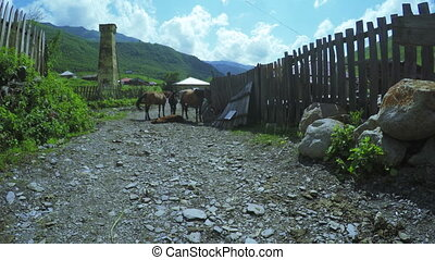 Horses on street - Horses nibbling grass on village in...