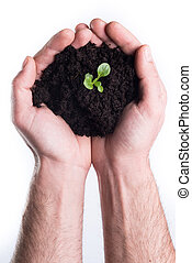 Hands holds topsoil with plant - Mans hands holds topsoil...